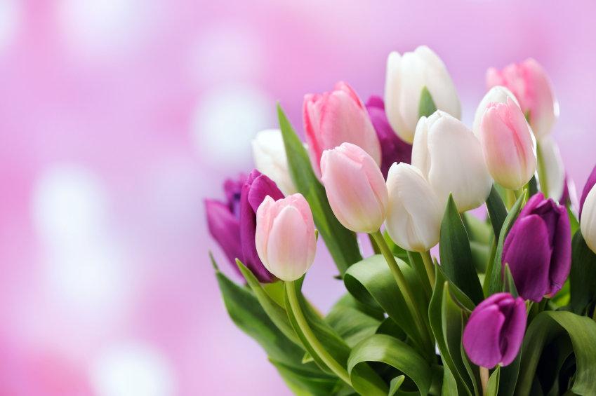 Создаются, тюльпаны открытки на 8 марта